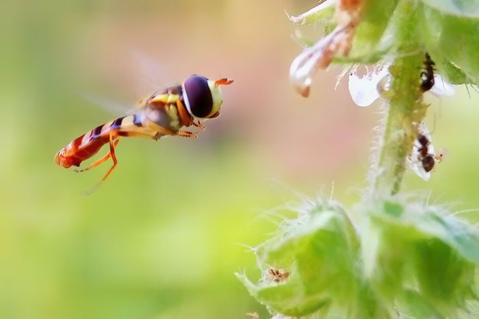 flaying Insect Animal Wildlife Animals In The Wild One Animal Animal Themes Close-up