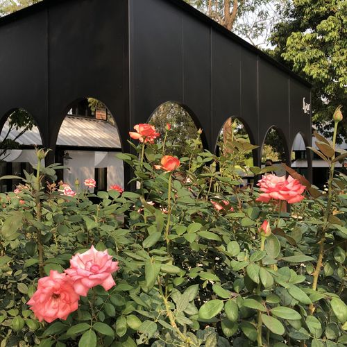 Pink flowering plants by building