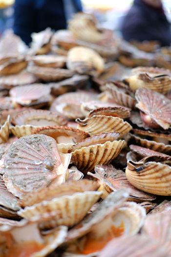Close-up of seashell