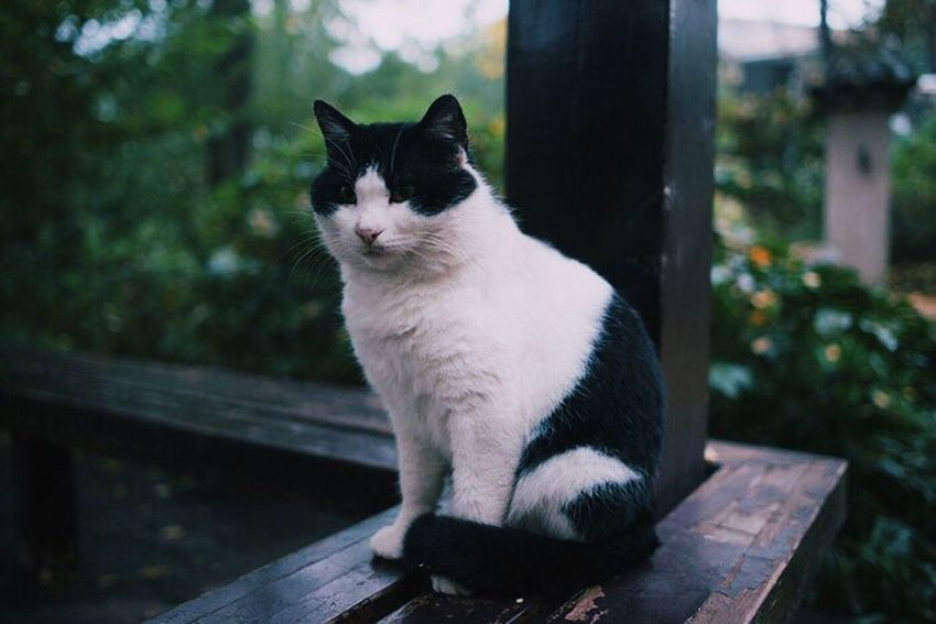Nature's Diversities Found On The Roll Hello World Enjoying Life Silent Moment Exploring Relaxing Taking Photos Cat Cute Animals