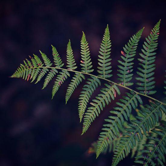 The ferns plants