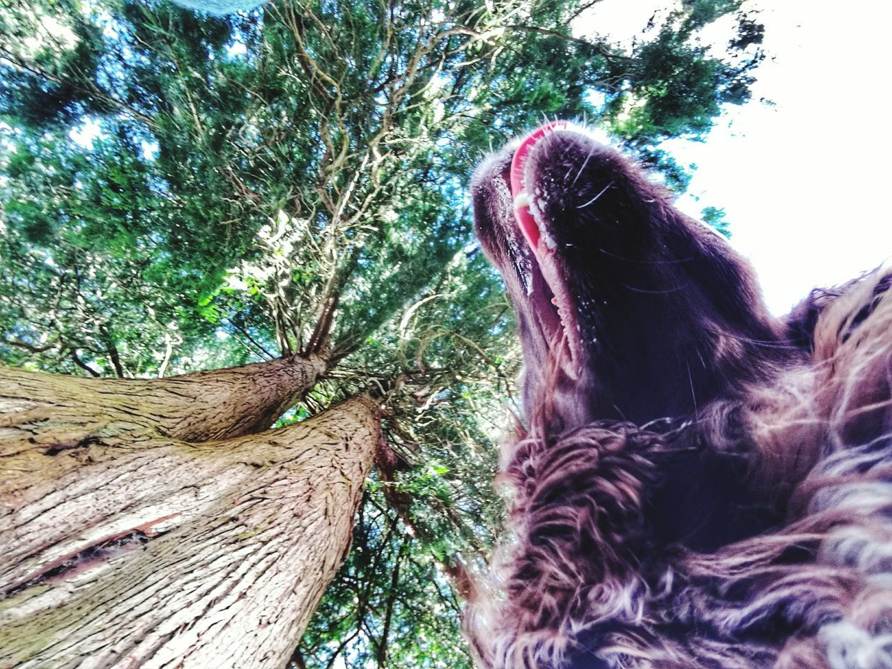 tree, one animal, animal themes, mammal, tree trunk, no people, wood - material, day, outdoors, nature, domestic animals, close-up, sky