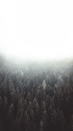 Foggy day at Lake Eibsee. Beauty In Nature Sky Fog Tree Nature No People Scenics - Nature Environment Outdoors Land Landscape Eibsee Germany Drone  Dronephotography Moody Sky Moody Wilderness Outdoor Photography Winter Wonderland Wintertime