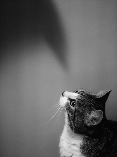 Blackandwhite Photography Monohrome Photography Pet Photography  Animal_collection Cats Of EyeEm Shadow Games