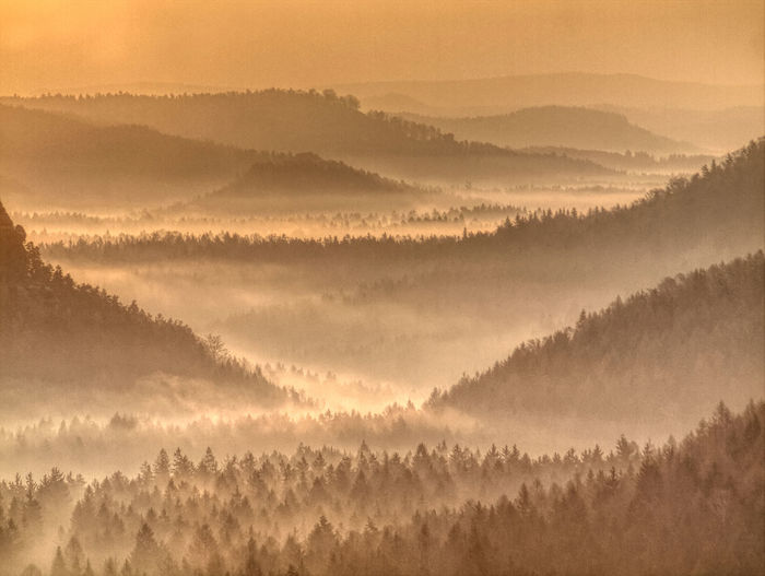 Strong sun rays illuminating sharp treetops of misty forest scenery with fresh and vibrant  foliage
