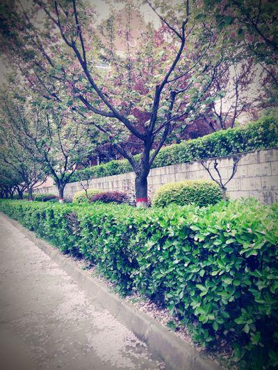 那一树的繁花落尽,也不抵你的一声问候。 Enjoying Life