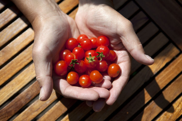 High angle view of hand holding tomatoes