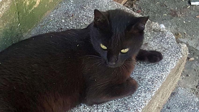 EyeEm Nature Lover Cat Of EyeEm Cat Portrait Cat Eyes Green Cat Eyes Black Cat Cat Pets Looking At Camera Domestic Cat Black Color Close-up