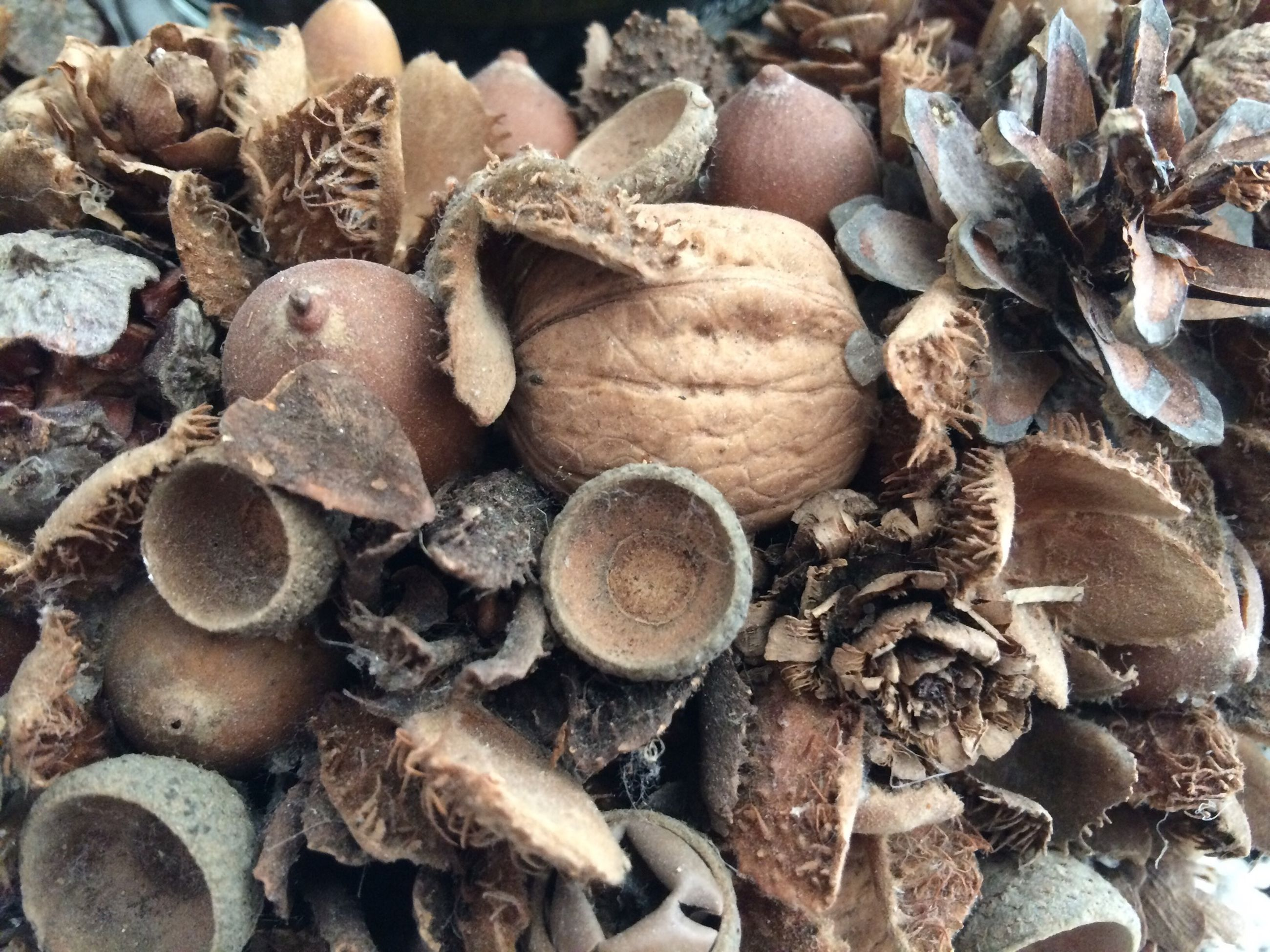 large group of objects, abundance, stack, high angle view, heap, close-up, firewood, lumber industry, healthy eating, log, deforestation, pebble, still life, food and drink, food, stone - object, nature, group of objects, outdoors, day