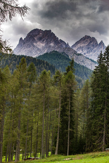 Hiking in Italy Day Land Nature Plant No People Tree Outdoors Italy Sesto  Wood WoodLand Hiking Hiking Trail Hiking Adventures Mountains Dolomites, Italy Dolomites Dolomiti Dolomiti Italy Dolomiten