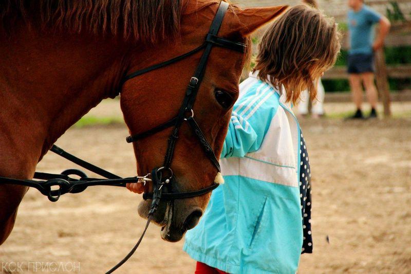 лошадь One Animal конныйспорт Day Sky лошадка Beauty красота Ilikehorse Beautiful Love ♥ People Horse Live For The Story