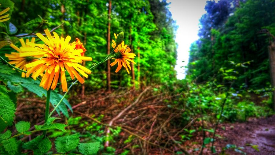Nature Photography Flower Forestwalk Forest First Eyeem Photo