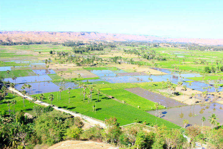sumba timur Water Rural Scene Flood Agriculture Rice Paddy Tree Multi Colored Aerial View Field Grass
