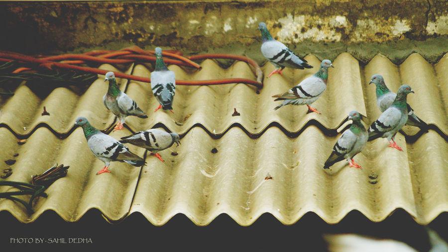 Piegion No People Outdoors Nature Freshness Day Piegion Birds Birds_collection Wine Not