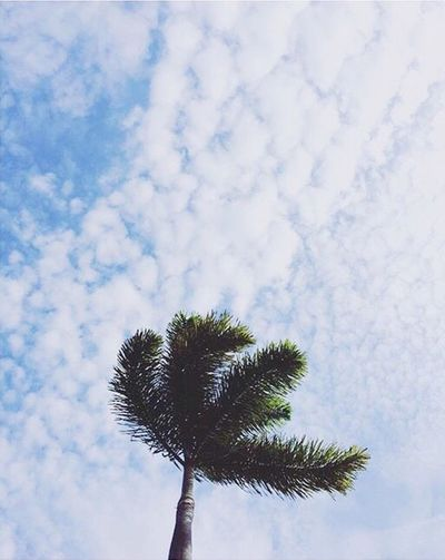 Relaxing Chilling Marinabaysands Lazy Day Good Weather Poolside Palm Trees Clouds And Sky Enjoying Life