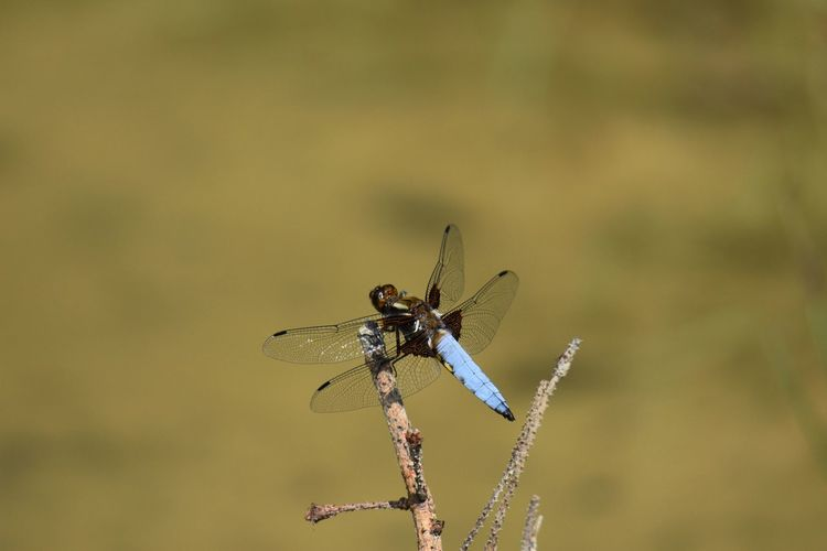 Close-up of dragonfly on plant