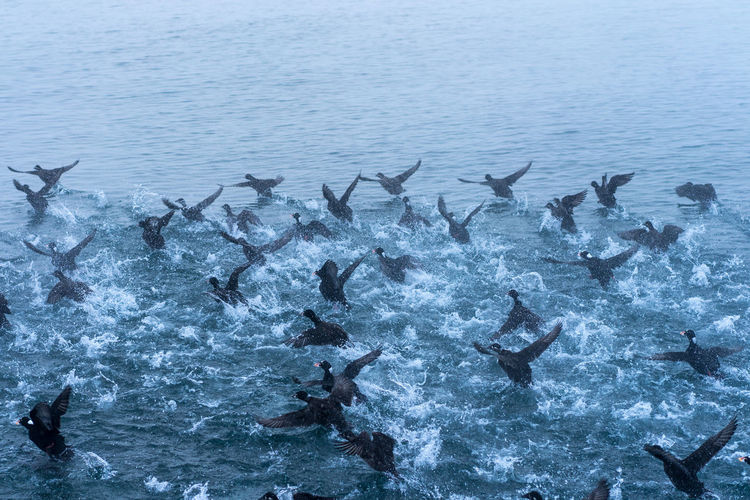 High Angle View Of Birds Flapping Wings In Lake