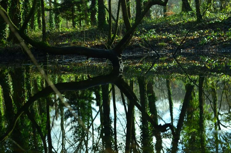 Water Reflections Treescollection Wildlovers Bretagne Lovers