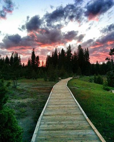 Beautiful Spring evening at Yellowstone Yellowstone Yellowstonenationalpark Nationalpark Gorgeous Nature_perfection Naturelover Getoutdoors Outdoorproject Goexplore Goback Adventure ExploreEverything Explore