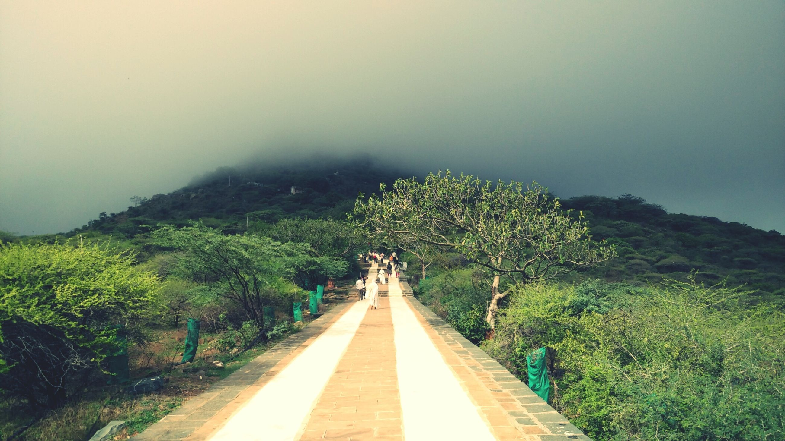 the way forward, diminishing perspective, tree, tranquility, vanishing point, tranquil scene, road, mountain, nature, green color, scenics, beauty in nature, transportation, sky, growth, non-urban scene, landscape, lush foliage, no people, outdoors