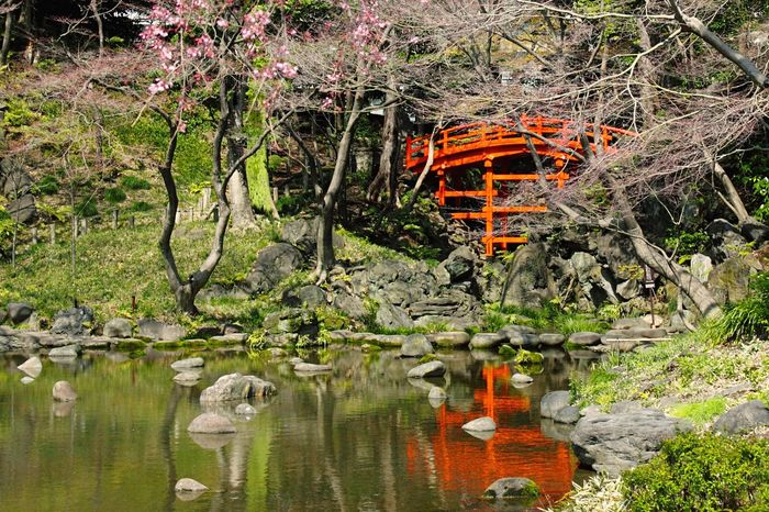 Tokyo,Japan Zen Garden Garden Garden Photography Green Color Green Water Water Reflections Red Bridge Sakura Tree
