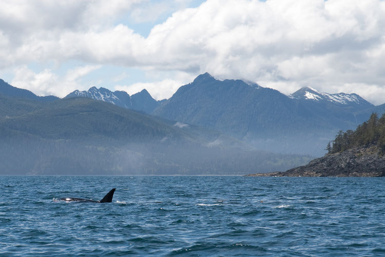 Killer whale swimming in sea against sky