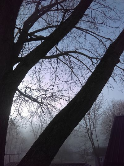 Fog Silhouette Tree Branch Low Angle View No People Nature Growth
