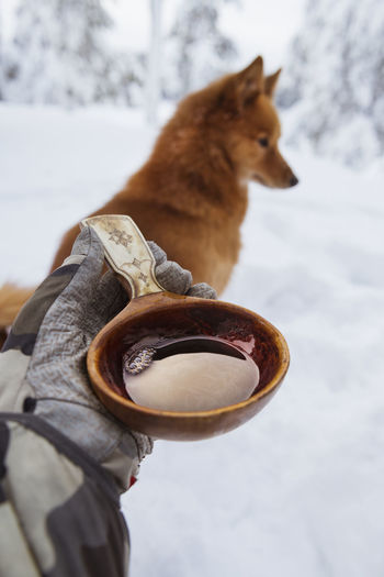 View of a dog holding snow