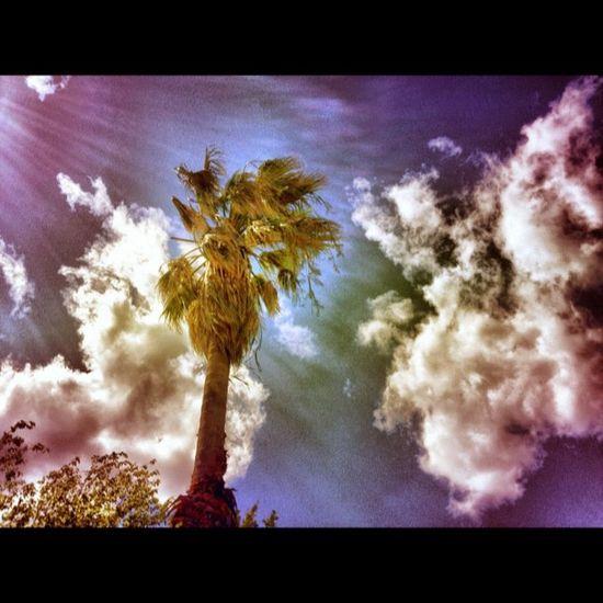 Windy Ubiquography Woodcamera Summer Mytilini IPhone Instalovers_gr Random 40like HDR Palm Windy Wind Snapseed Igers 40 30likes 40likes