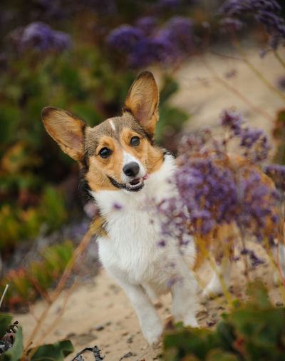 Portrait of dog by flowers