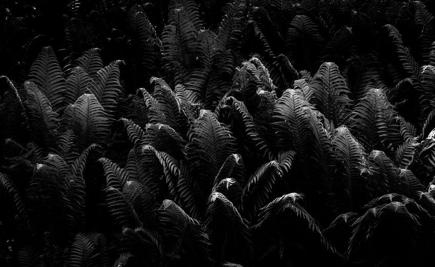 Full frame shot of palm trees on field