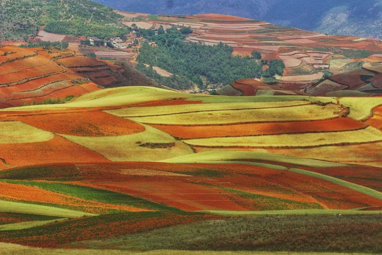 Yunnan China Photos Landscape_photography Landscape_Collection China Multi Colored Rural Scene Agriculture Terraced Field Field Full Frame Landscape Patchwork Landscape Cultivated Land View Into Land Farm Plantation Farmland Rice Paddy Agricultural Field Plowed Field