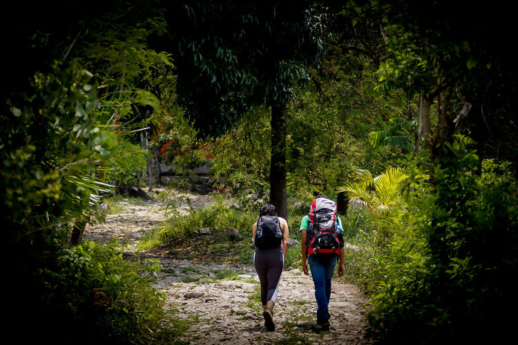Rear view of people walking on footpath in forest