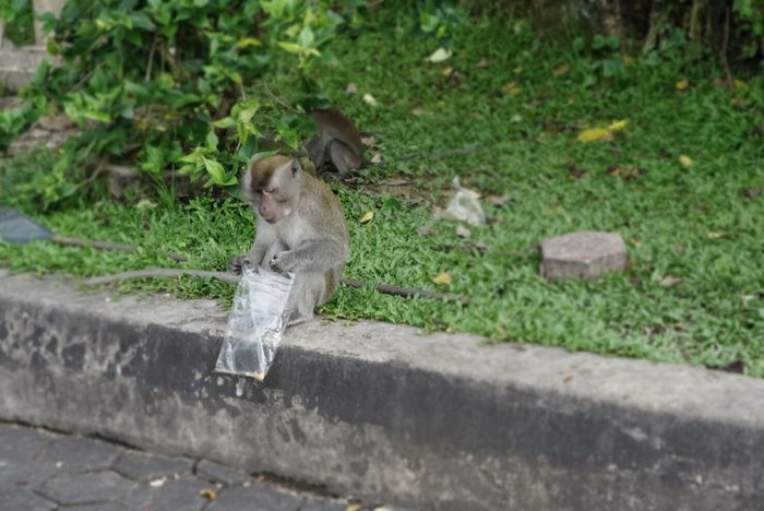 Animal Themes One Animal Outdoors Day Animals In The Wild Animal Wildlife Mammal Nature No People Retaining Wall Monkey