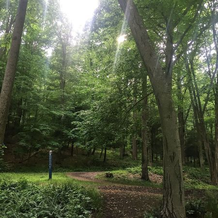A cool afternoon run through the woods. Trailrunning Trees Solitude Trail Running Trail Tree Woods Nature Running Forest Park