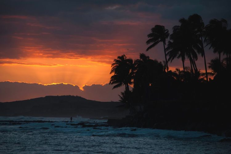 Tree Sunset Sky Beauty In Nature Scenics - Nature Plant Palm Tree Tranquil Scene Water Silhouette Tranquility Nature Cloud - Sky Tropical Climate Idyllic Orange Color Outdoors