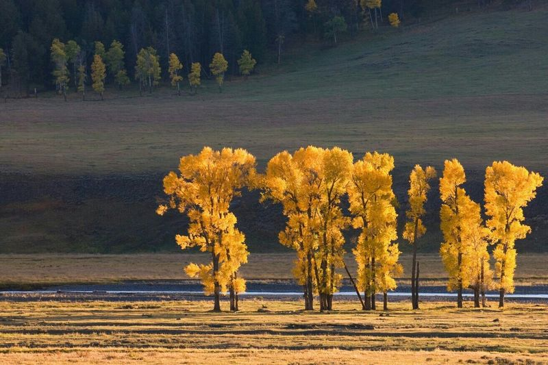 Taken in Lamar Valley Yellowstone Lamarvalley Yellowstone Yellowstonenationalpark Fall Fall Colors Fall Leaves Vacation Hanging Out Check This Out Relaxing