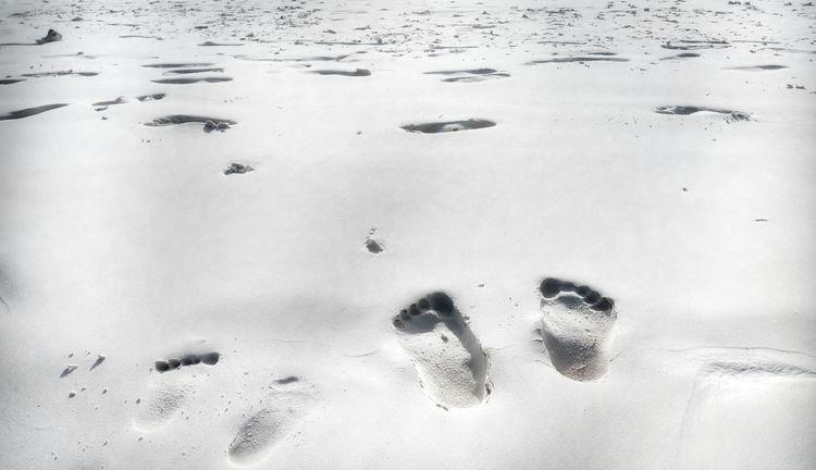 Sandy Beach Footprints In The Sand Beach Backgrounds Sand Full Frame Track - Imprint FootPrint Paw Print Close-up Handprint Animal Track Fingerprint
