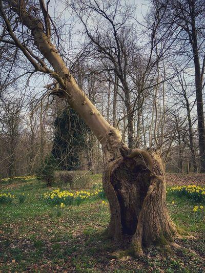Bare tree in field