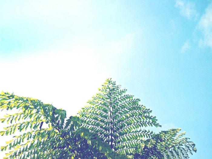 Sky Tree Ciel