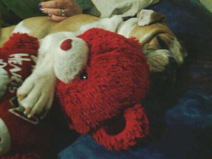 Bulldogs ♥ Sleeping Bulldog Dogslife Dog Days Dog Lover Dog❤
