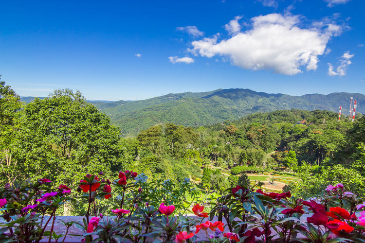 Flower bed forest mountain and blue sky background Chiang Rai Chiang Rai, Thailand DoiTung Flower Bed Thailand Beauty In Nature Blue Sky Colorful Day Flower Freshness Green Color Growth Mae Fah Luang Mountain Nature No People Outdoors Plant Salvia Salvia Flowers Scenics Sky Tree
