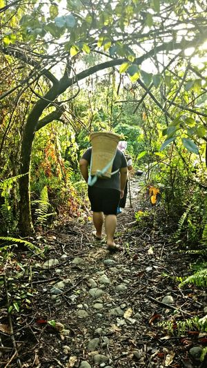 Journey to mokibambangan. Nature Sabah Borneo Malaysia Journey Basung Tanakwagu Green Forest Forestgarden Phonography  Oppography F1soppo Path Life Tree