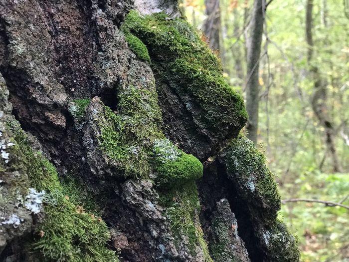 Tree Plant Moss