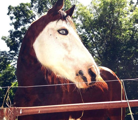 Isnt he gorgeous?! 💕💕🐎 .. Horses Sopretty Eyes Whiteeyes Beautiful Photography