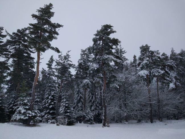 Winter trees Neige