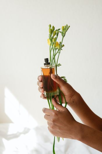 Person holding glass of plant