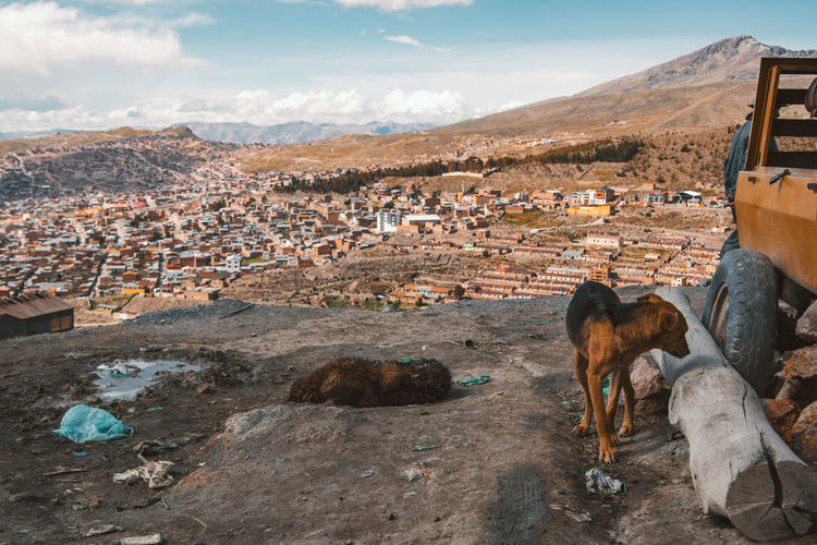Stray dogs on ground above city