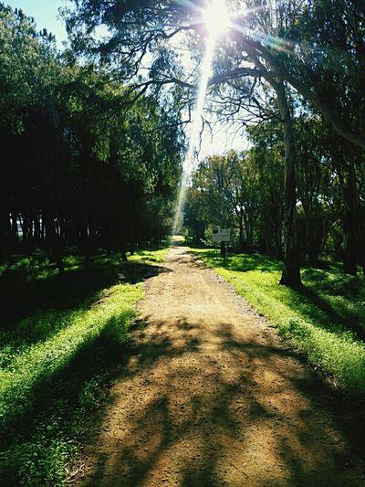 Komorebi Woods Sunlight Through Trees Hiking