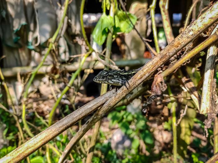 Close-up of a lizard on a land